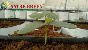 Protected Cultivation Methods