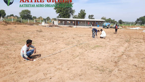 Future of Agriculture is Shade Net House