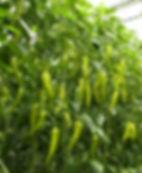 Agronomy Service.JPG