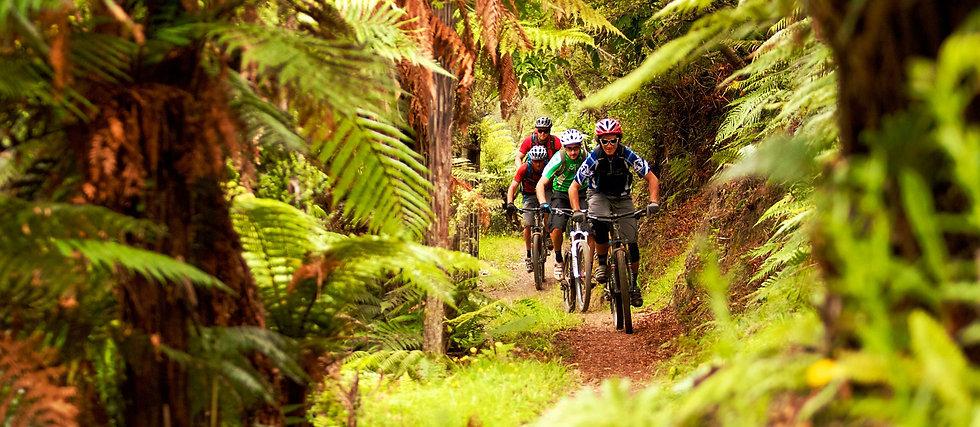 AC63-Kawakawa-Bay-Track-Rotorua-Tourism-