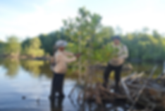 ecoviva mangrovewithguards.png