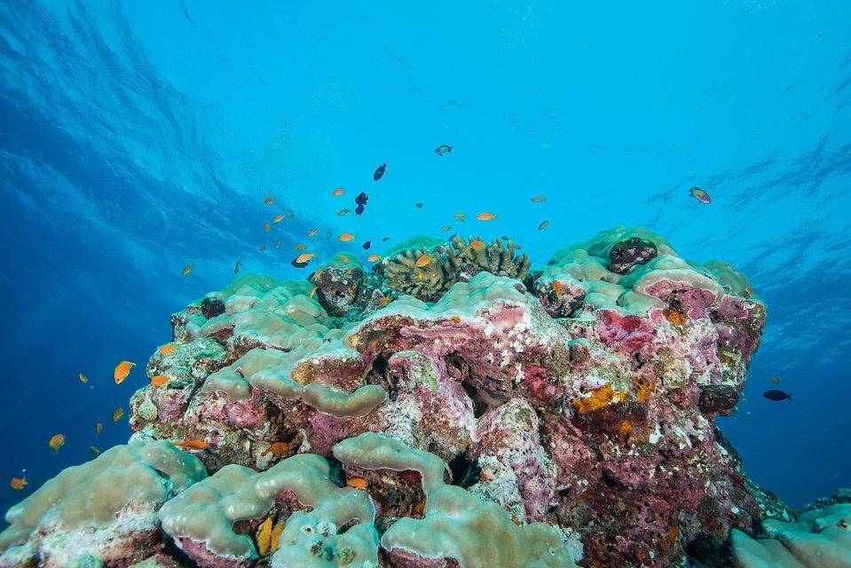 Expedition_Maldives_2020_Lhaviyani_Atoll