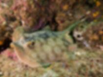 JLRound-stingray-1024x768.jpg