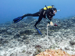 Reef Survey