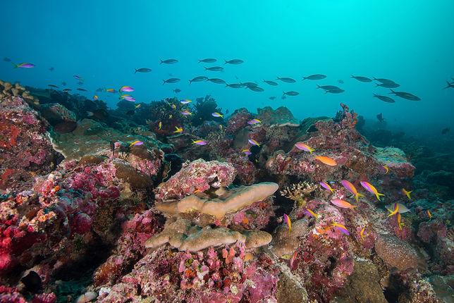 Expedition_Maldives_2020_Dhaalu_Atoll_St