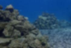 Reef-Doctor-Artificial-Reef.jpg