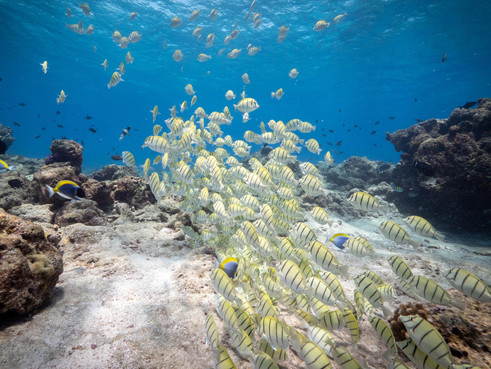 Noo Raajje Begins Second Expedition to Complete Comprehensive Study of Maldivian Coral Reefs