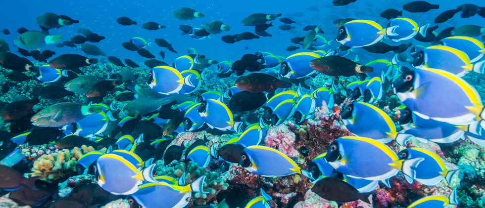 Parrotfish_EmanuelGoncalves.png