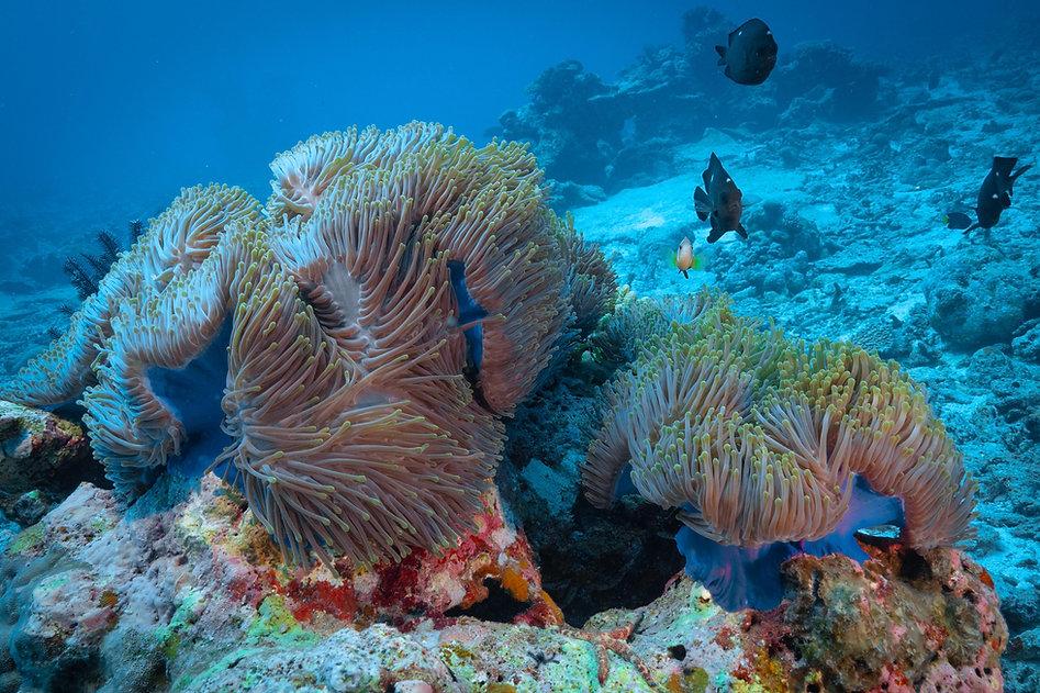 Maldives_Huvadhoo _23032021_JLepore_PANA