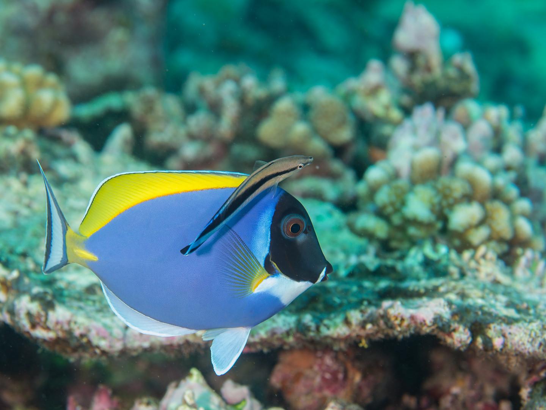 Expedition_Maldives_2020_Haa_Alif_Atoll_