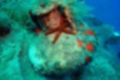 Albanian Sea Star