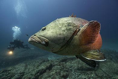 Selvagens Fish