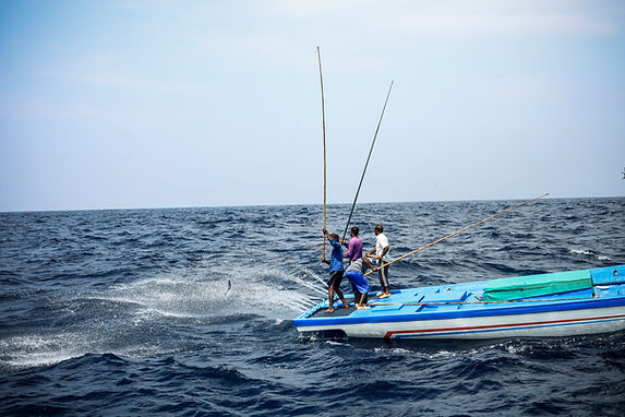 A_Pole and Line fishing in action in the