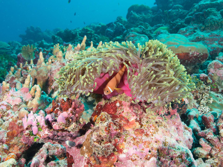 Expedition_Maldives_2020_Thaa_Atoll_Stat