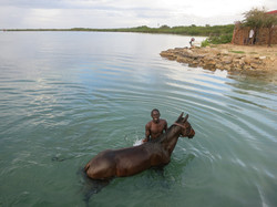 Local on his horse