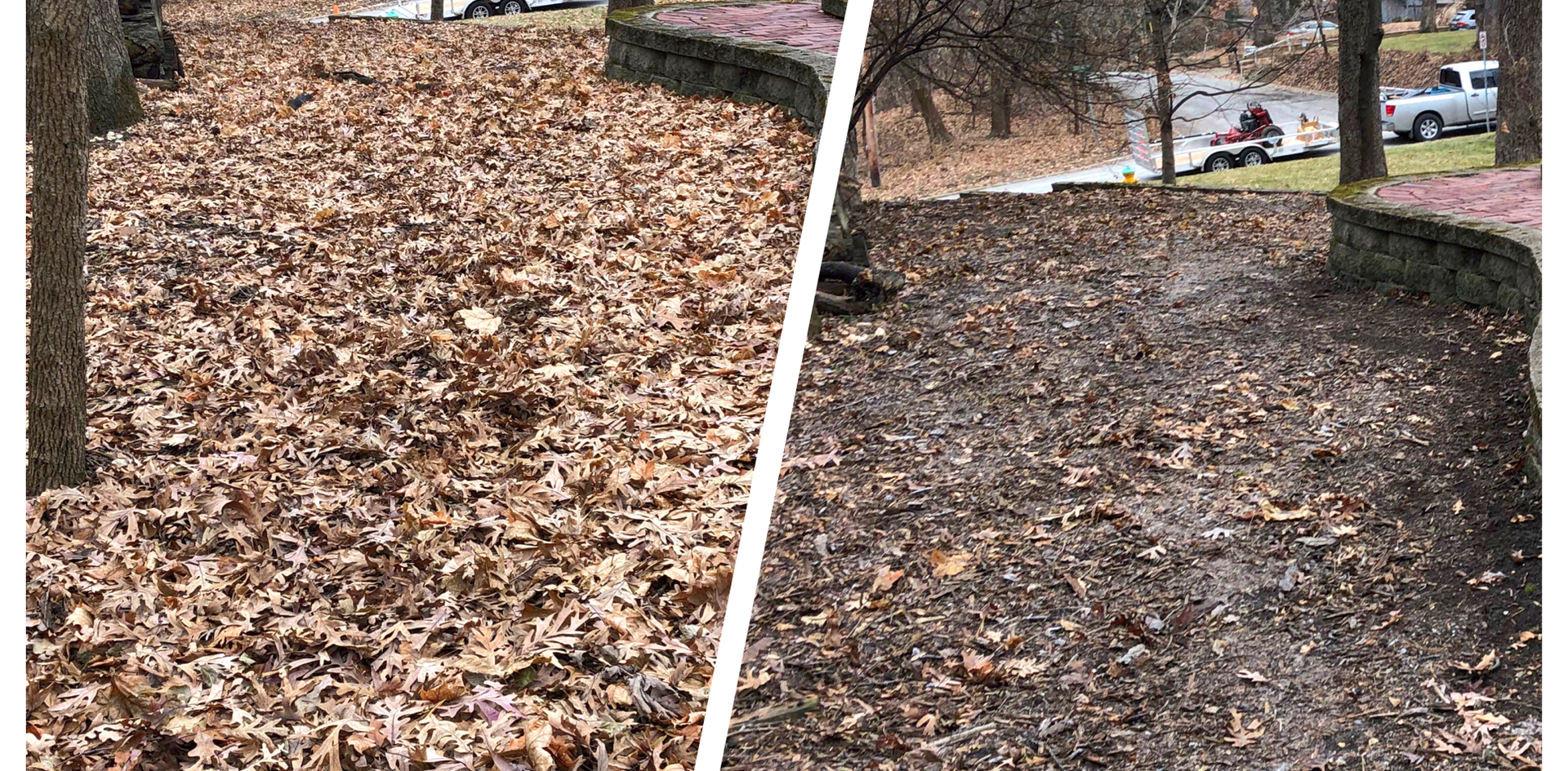 Before & After Leafs