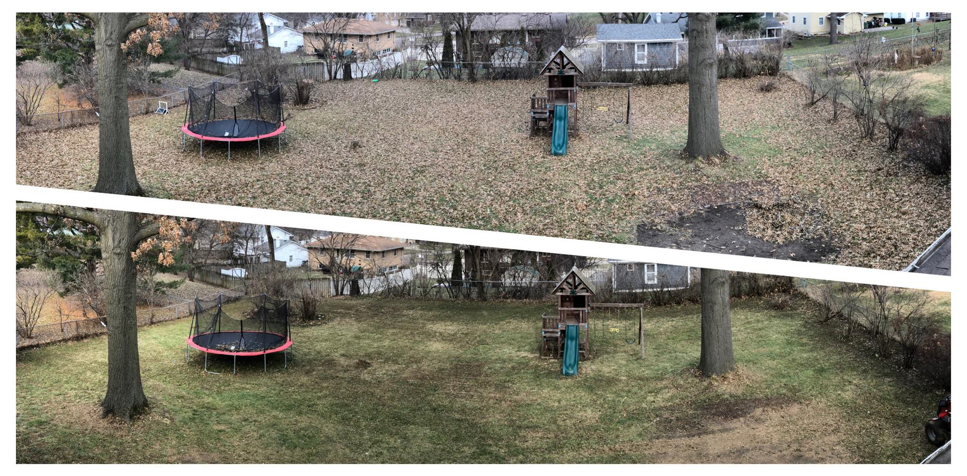Full Backyard Cleanup