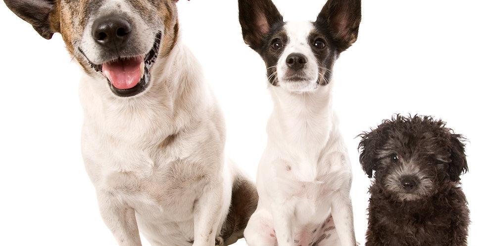 Wunsch-Heilstein-Hundehalsband