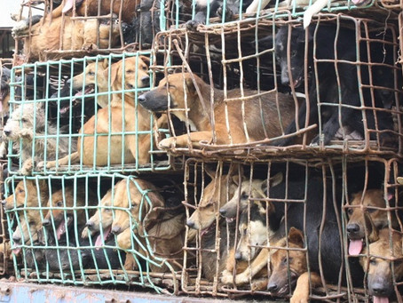 All Puppy Mills Should Be Banned!