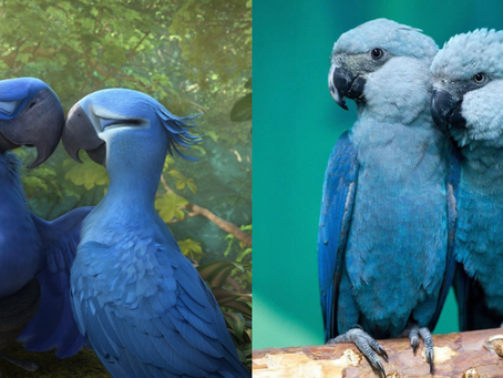 Endangered Blue Macaw