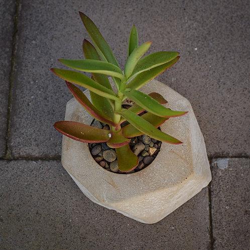 Concrete Planter Large