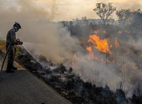 歐洲 8 國:森林破壞加劇 阻礙購買巴西產品
