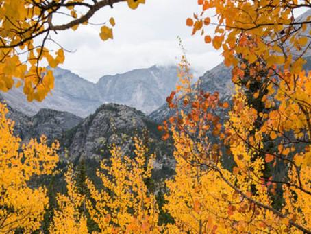 科州多变天氣導致最佳賞秋時間到來更早