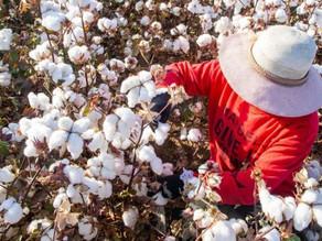 新疆官員回應中國抵制 H&M 風波: 企業不應將經濟行為政治化