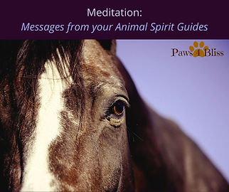 Messages from your Spirit Animals Medita