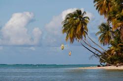 Kite surfer & palms at Pigeon Point