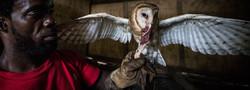 Birds of prey rescue centre