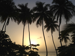 Palm trees silhouetted during sunset