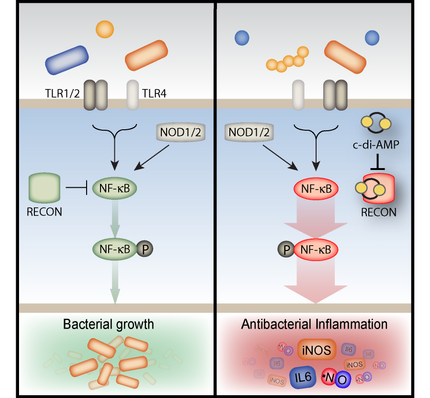 Adelle's paper on RECON published in Immunity!