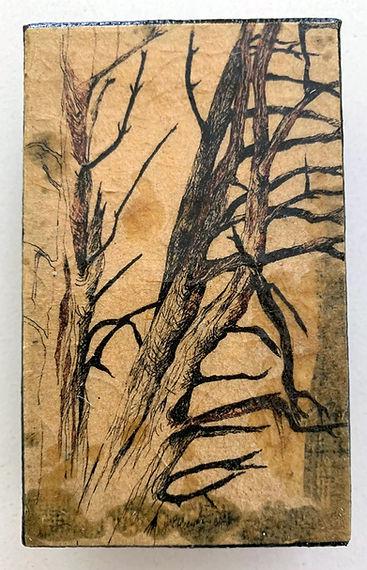 Pine (1).jpg