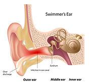 Outer Ear.jpg