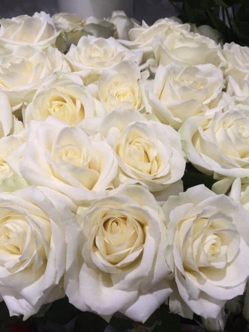 Rose blanche 60 cm / 5 euros la pièce
