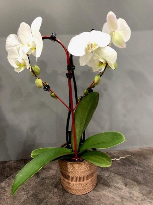 Orchidée en pot blanche  Avec cache-pot