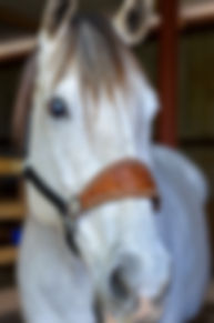 White Horse.jpg