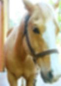 Light Brown Horse.jpg