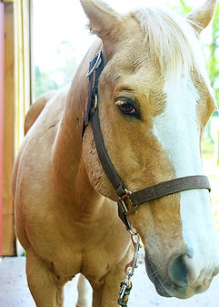 Light Brown Horse.jpg