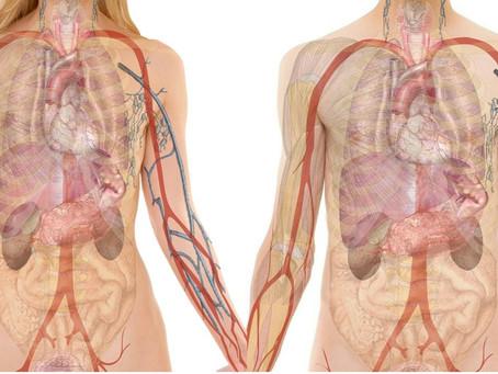 Health Chatter: Anatomy School: The Pancreas