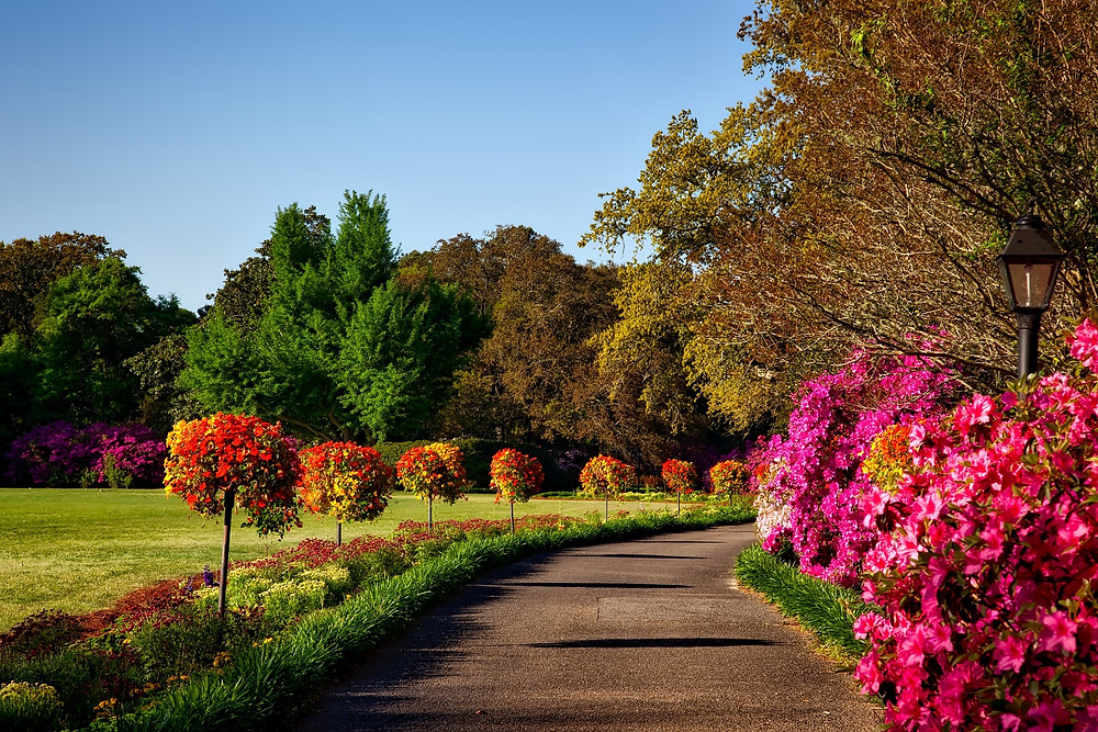 Concrete path surrounded by multi-coloured foliage