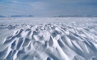 Arktisk ørken