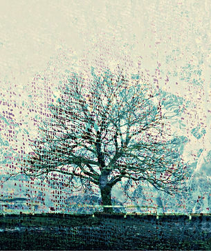 young oak wix.jpg
