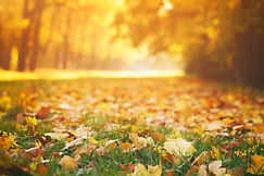 fallen autumn leaves on grass in sunny m