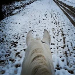 Passeggiate Invernali