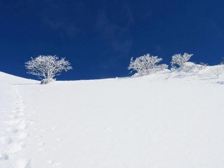 今月の香り・雪景色・・・