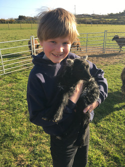 We check the lambs at a day old