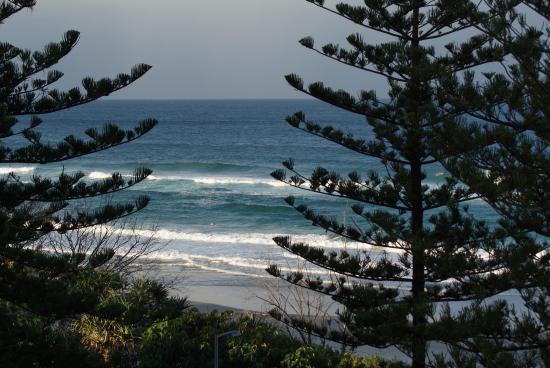 Pine (Ocean)