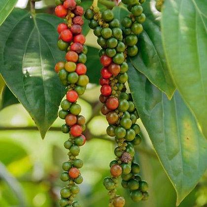 Pepper(Black)